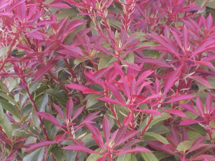 Ik weet niet wat voor plant het is. Maar ik vind het we een hele mooie plant. Want hij is zo leuk paars en roze tegelijk.