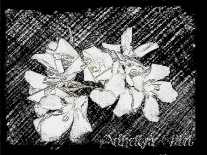 Lauriee en fleur