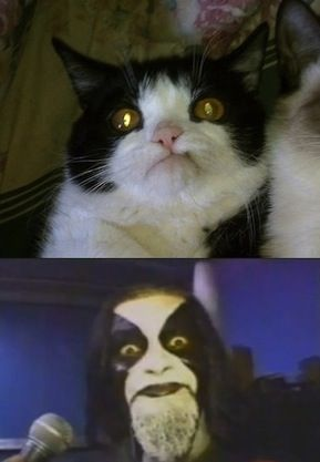 Funniest Black Metal Versions of Famous Memes