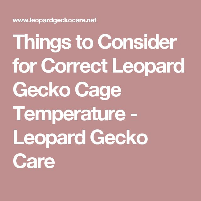 Things to Consider for Correct Leopard Gecko Cage Temperature - Leopard Gecko Care