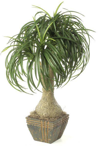 "palm tree identification   Ponytail Palm Tree Artificial 32"" [P-3120]"