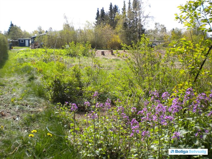 Åsen 16, Ejby, 4070 Kirke Hyllinge - Byggemodnet fritidsgrund #fritidsgrund #grund #grundsalg #kirkehyllinge #selvsalg #boligsalg #boligdk