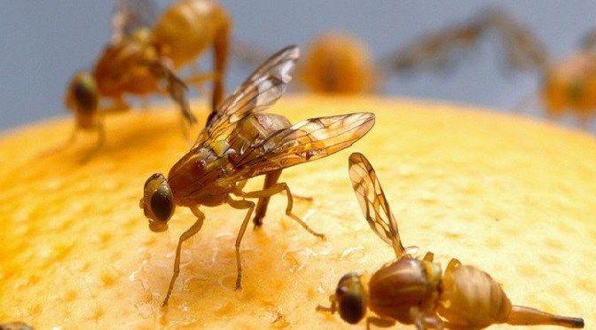 Could oils from fruit fly larvae and algae feed the world? - ALGAE WORLD NEWS