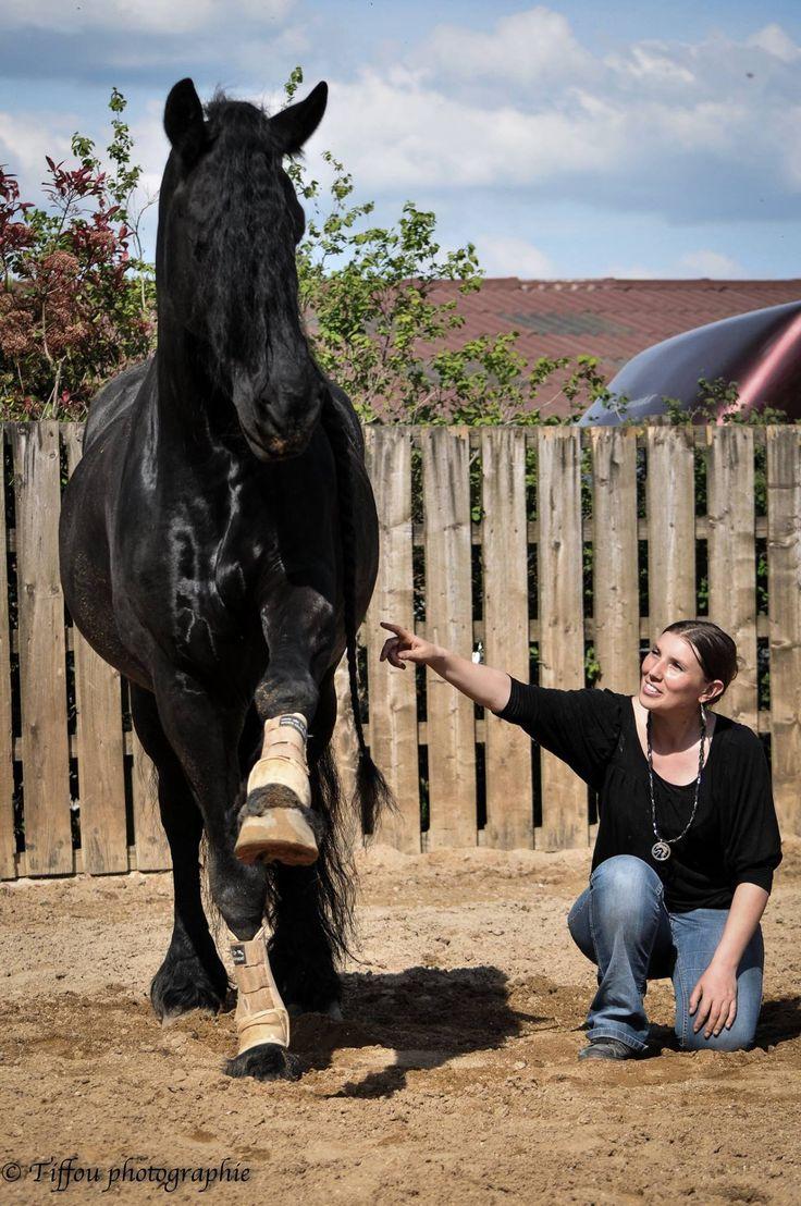 Les 17 meilleures images du tableau ph a petra bintje - Dessin de chevaux sauvage ...