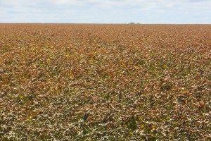 Perubahan iklim menyebabkan turunnya hasil panen di sektor pertanian.