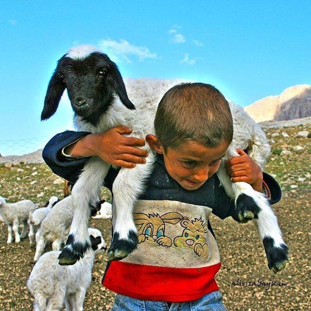 Kayseri'den küçük çoban ve kuzusu... Tebrikler! ♛ ★  Fotoğrafı Gönderen: @alirizabaykan
