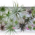 10 manieren voor verticaal tuinieren