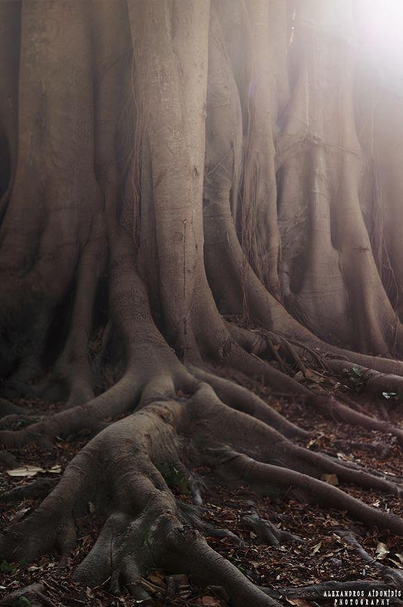 The Power of Nature by AlexAidonidis on deviantART