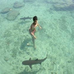 Swimming with baby sharks at Karimun Java resort, Indonesia.