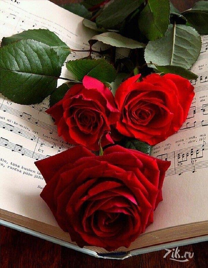 Розы для ани картинка
