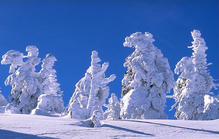 PRANOSTIKA NA ŠTVRTOK 10. NOVEMBRA: Snehy novembrové, decembrové, januárové zostanú
