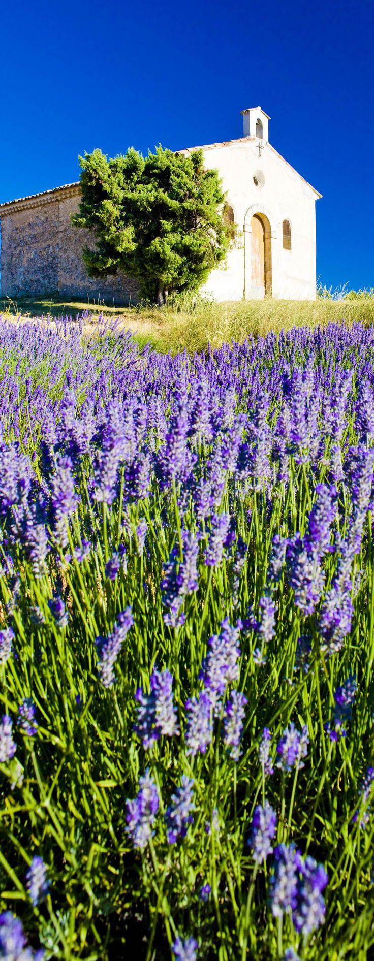 A chpel un a lavender field