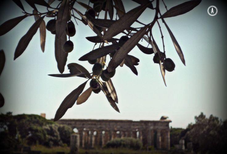 Paestum, sito archeologico (Campania, Italy)