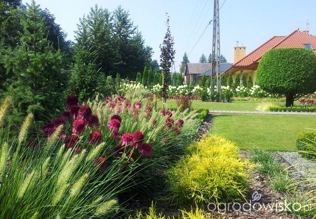 Moja codzienność - ogród Oli - strona 925 - Forum ogrodnicze - Ogrodowisko