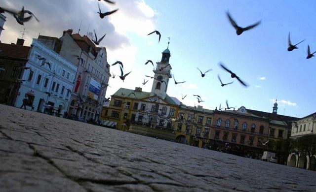 Cieszyn, market square, pidgeons