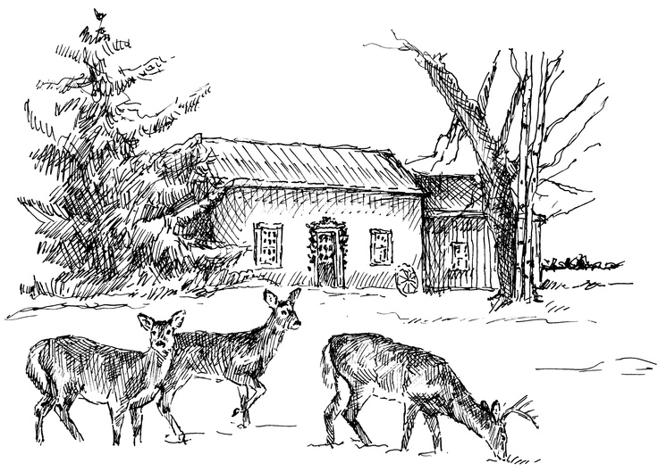 Pen sketch of the house for my Christmas card