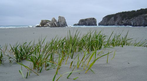 Salmon Cove Sands, Newfoundland