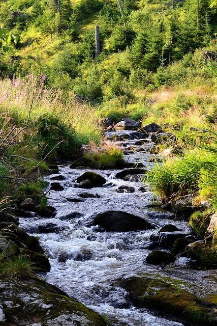 Hamersky potok in Sumava Mountains - Czech Republic