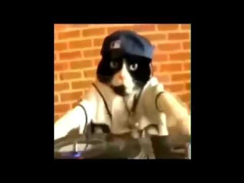 Funny Cats video Dancing, singing and TWERKING | Best of 2016 -  #animals #animal #pet #cat #cats #cute #pets #animales #tagsforlikes #catlover #funnycats See funny video compilation of cats singing (atleast trying to sing) , dancing  and twerking. Best collection of 2016. Please leave a thumbs  up and don't forget to subscribe. Have a laugh 🙂  - #Cats
