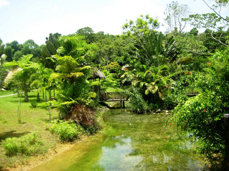 The Most Interesting Attractions In Jamaica Attractions In