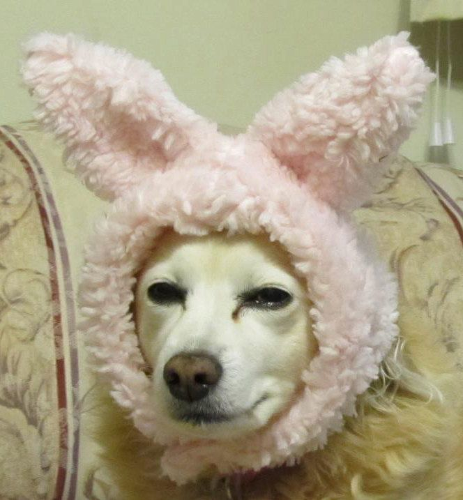 Doggies would be so cute in Easter Pictures with Easter Bunny Hat 6 Colors availabl. $12.00, via Etsy.