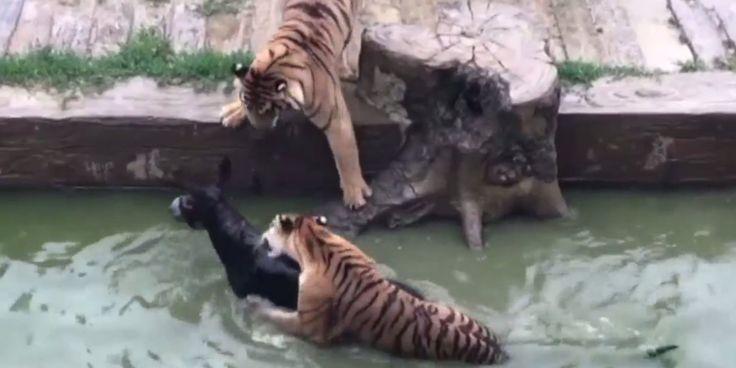 Indignation à la suite de cet acte de cruauté animale dans un zoo de Chine