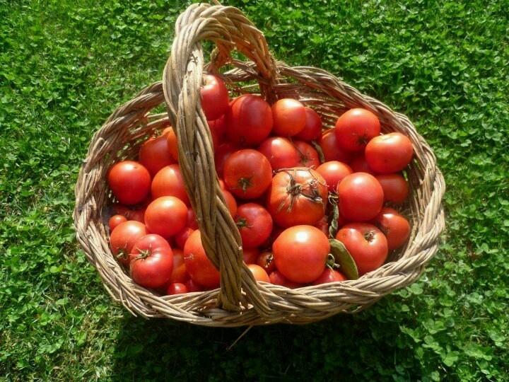 Tomates del huerto