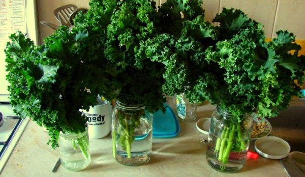 Dlaczego warto jeść zielone liście i pić zielone koktajle?