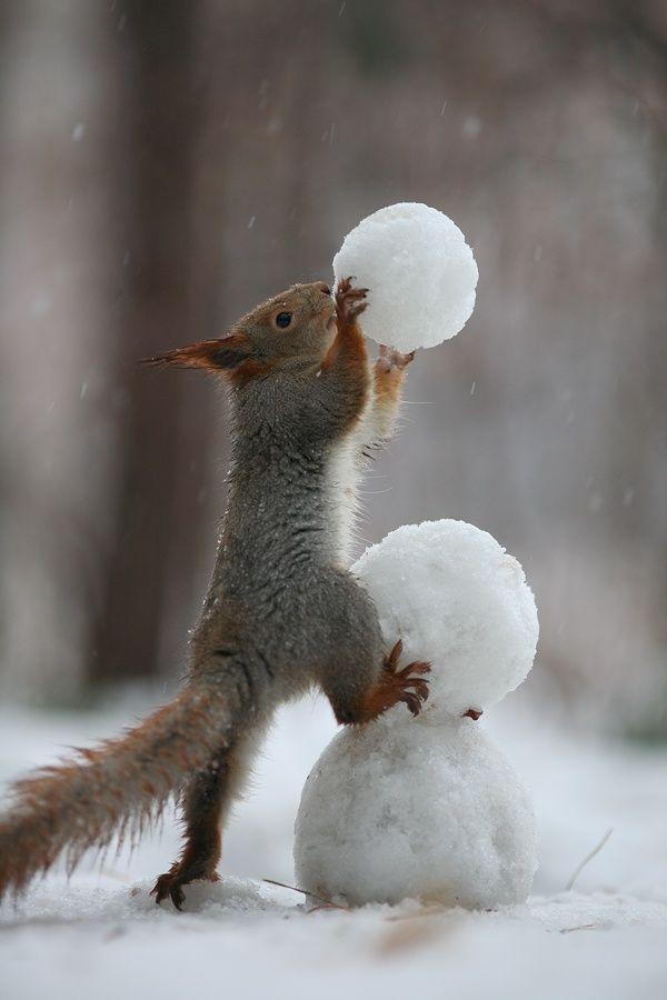 Un petit écureille qui fait un bonnome de neige.