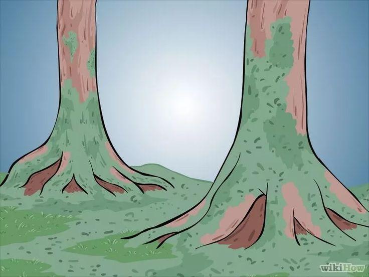 20 best Pflanzen ohne Erde images on Pinterest Vertical gardens