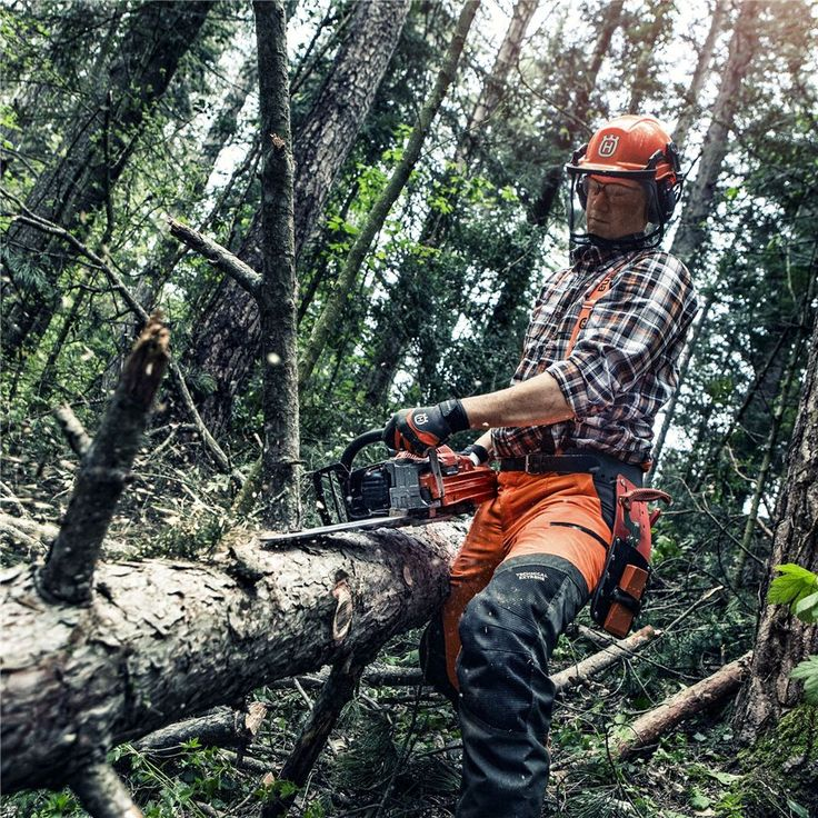 The forest is too valuable not to be thought of from a long perspective. Because of this, tree care and nature conservation not only should – but also must – be a part of modern forestry.Learn more about tree care