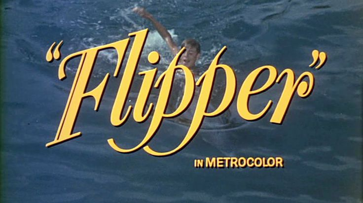 61 Best Flipper Images On Pinterest Childhood Memories