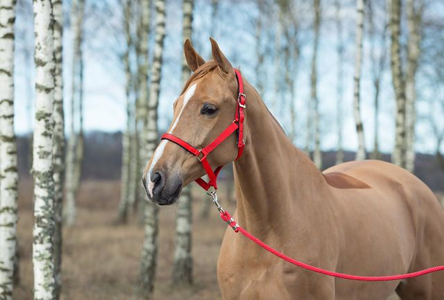 Durable halter with silver look fittings and soft padding at the