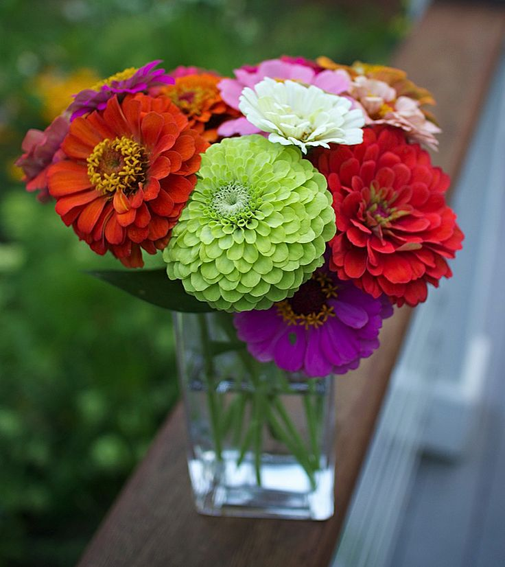 Zinnia Varieties Zinnias So Beautiful Pinterest