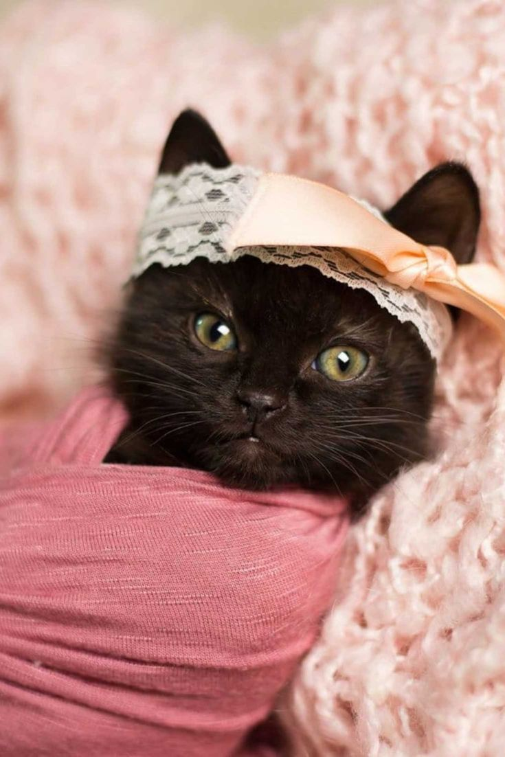 Woman Does Newborn Photo Shoot With Kitten And The Pictures Have Stolen Our Hearts Puppiesphotoshoot Kitten Kitten Photos Newborn Kittens