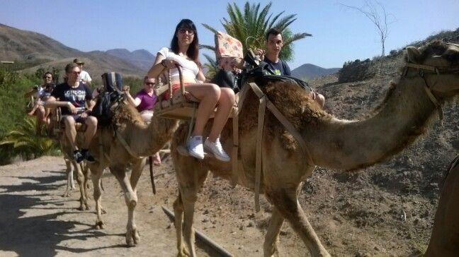 Giro panoramico sul cammello <3 Semplicemente meraviglioso!!!