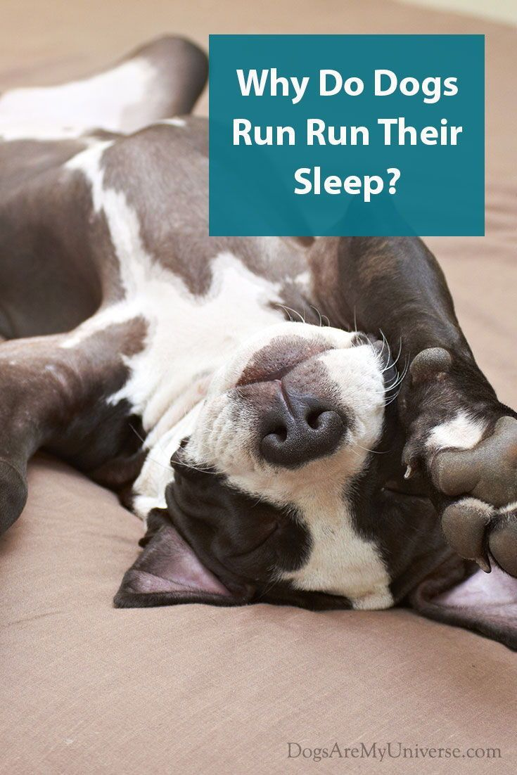 Why Does My Dog Kick His Legs While Asleep? Dogs, Dog