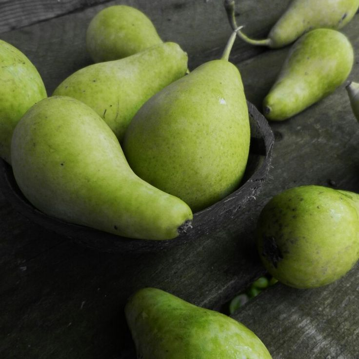 Organic pears, from my garden...