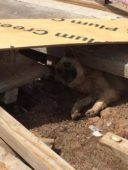 Why This Emaciated Mommy Dog Is Digging A Hole Will Break Your Heart
