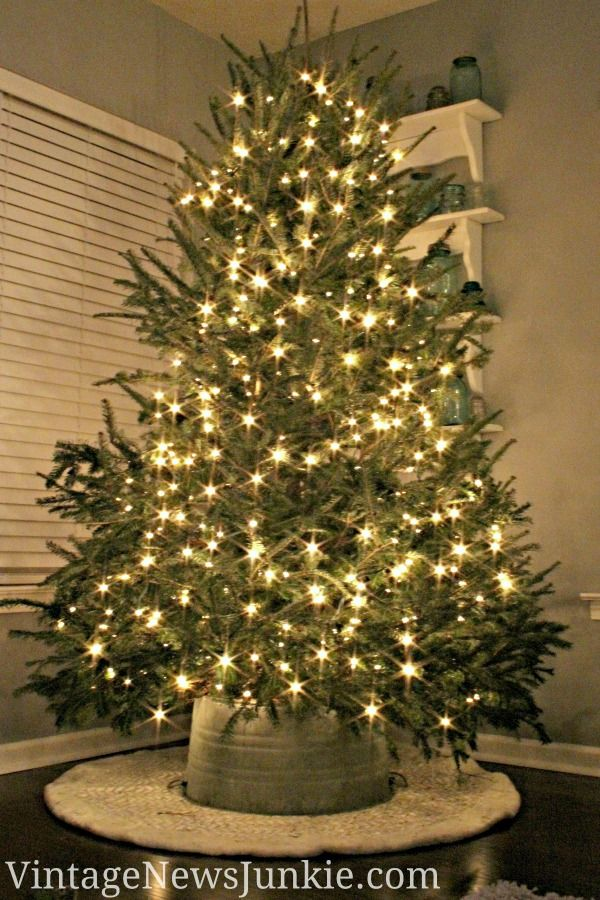 diy christmas ideas use a galvanized bucket instead of a tree skirt - Mini Live Christmas Trees