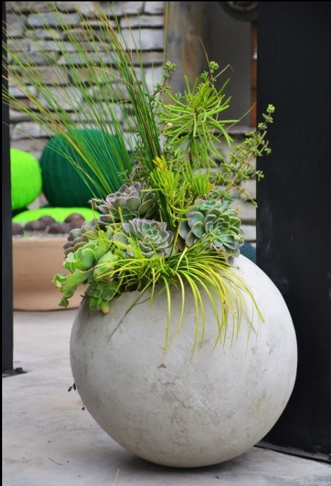 Contrasting colours and textures planted in concrete balls