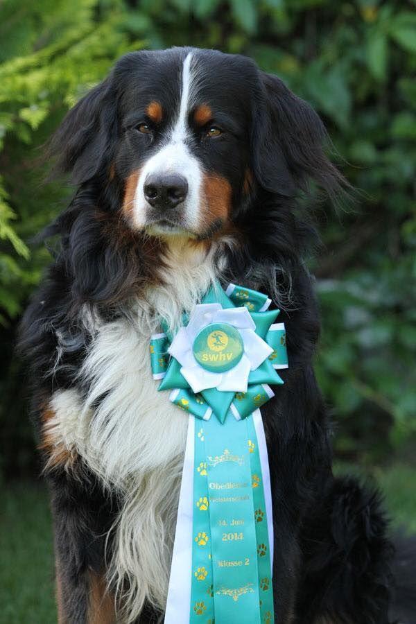 Hundesport Obedience Milimeterarbeit Mit Hund Mit Bildern Hundesport Hunde Hundetraining
