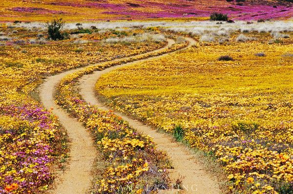 Hester Malan Wildflower Garden And Goegap Nature Reserve in the Namaqualand area of South Africa