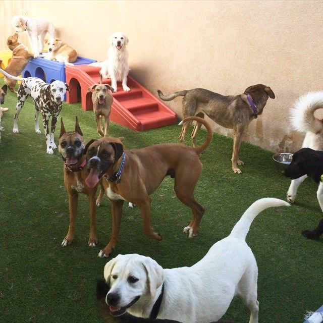 An Affordable Clean Hygiene Safe Dog Sitter In Los Angeles Is