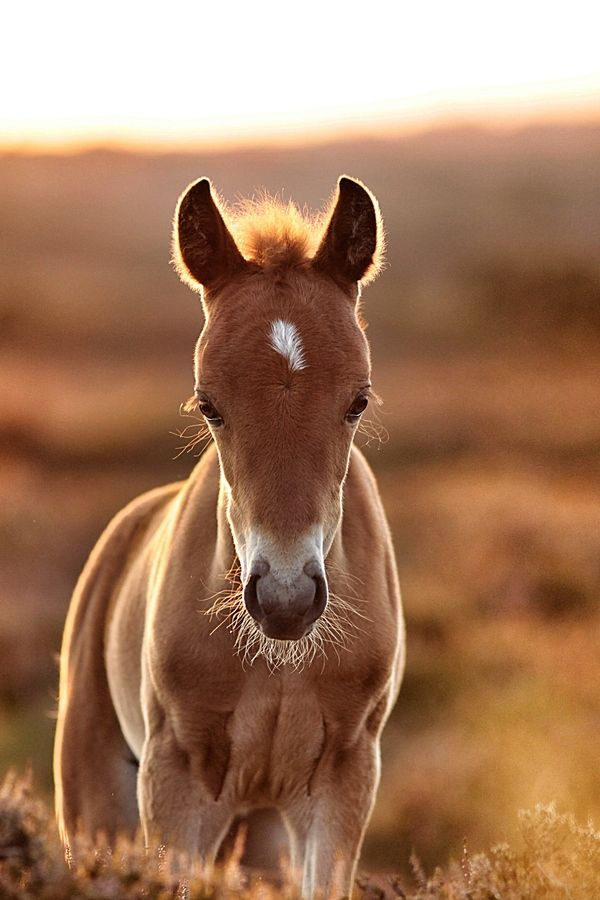 Golden foal by Lee Crawley