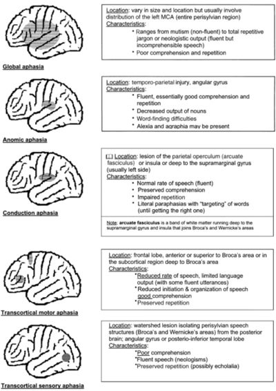 Types/Locations of Aphasia