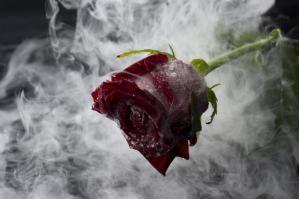 Red Rose in Liquid Nitrogen - DAJ, Getty Images