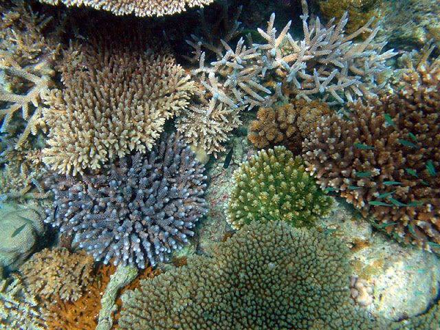 A Sustainable Reef Aquarium? | Bright Side of the Reef