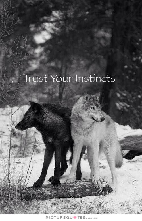 Always trust your instincts. Picture Quotes.