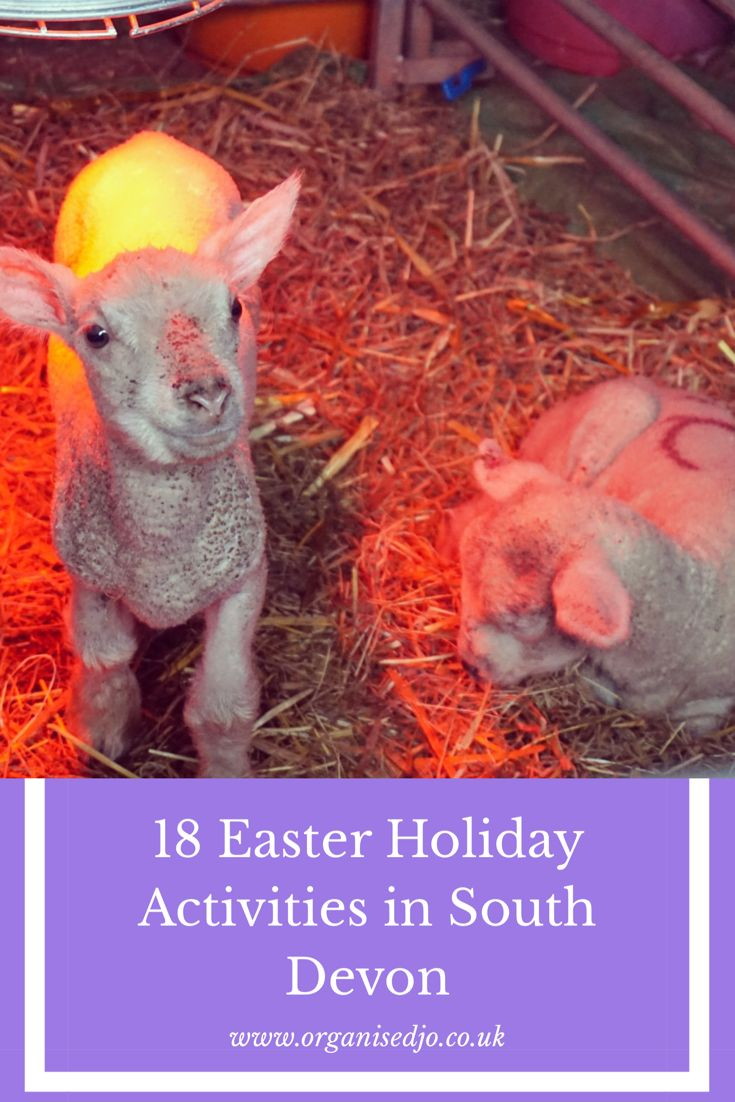 Need ideas for days out during the Easter school holidays? Then check out this post which includes 18 activities taking place in Torbay & South Devon.